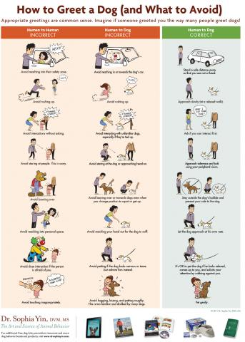 Poster showing how to greet dogs safely